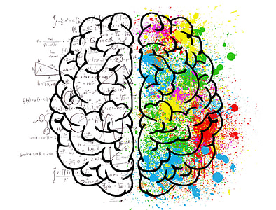 MIND dijeta mozak