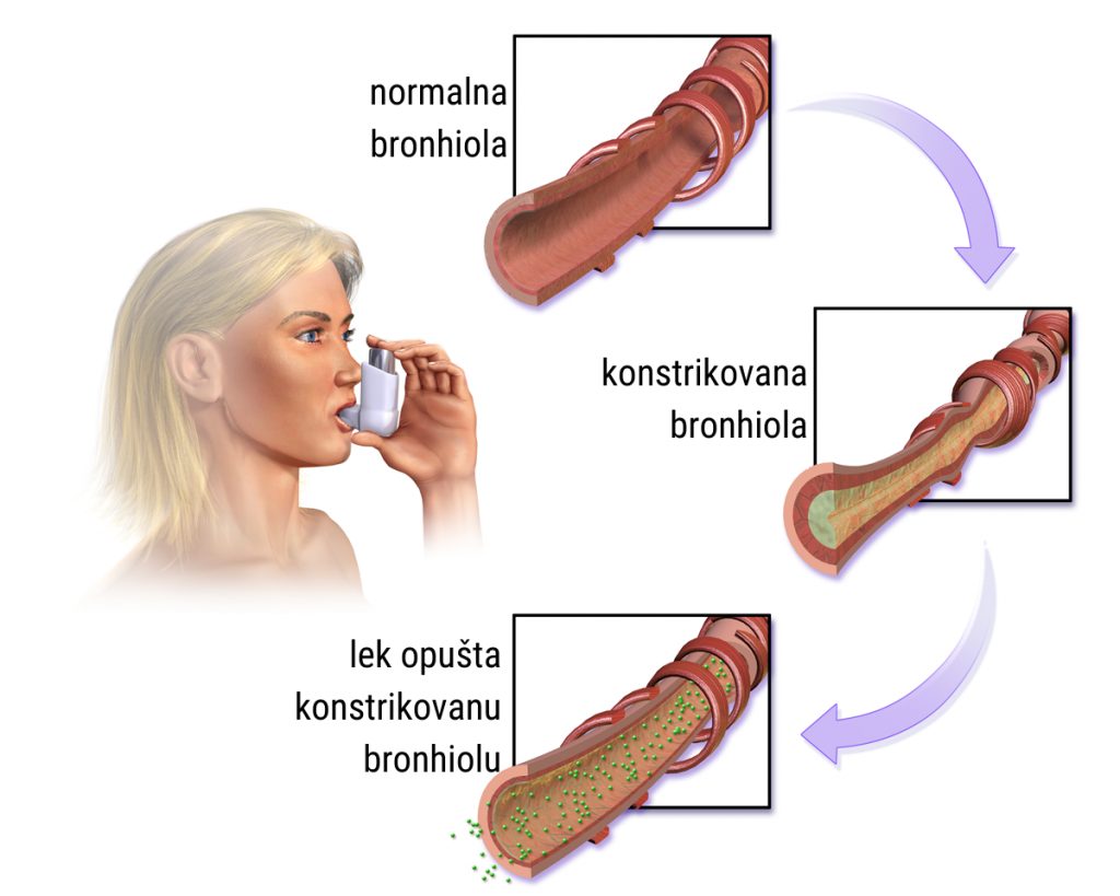 Bronhodilatatorni (Ventolinski) test